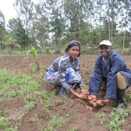 Kenya Accelerated Value Chain Development Program Performance EvaluationAward - FTF Kenya AVCD