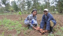 Farmer Cyrus Bundi and wife display their improved potato seed nursery. (Photo: AVCD/Muthoni Njiru)